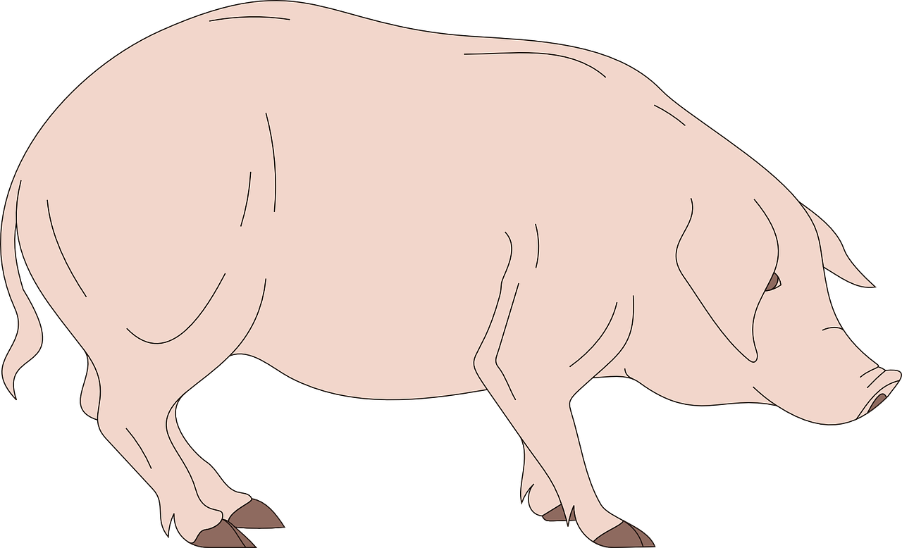 Barn Pig Side View Standing