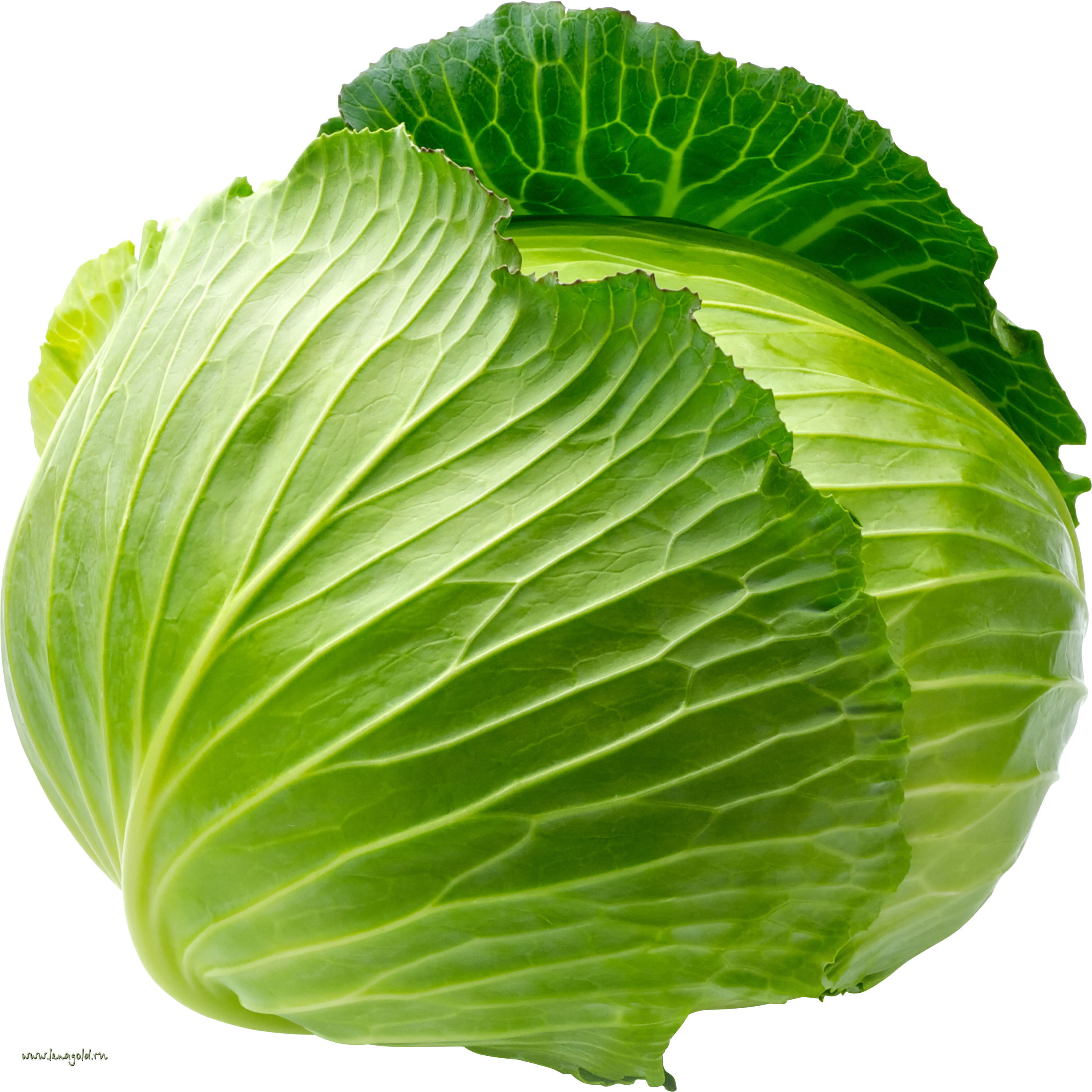 Cabbage HD