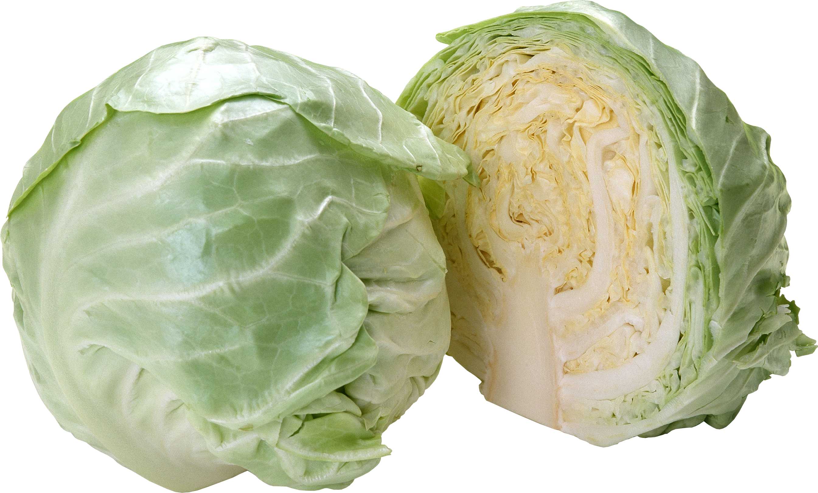 Download Cabbage