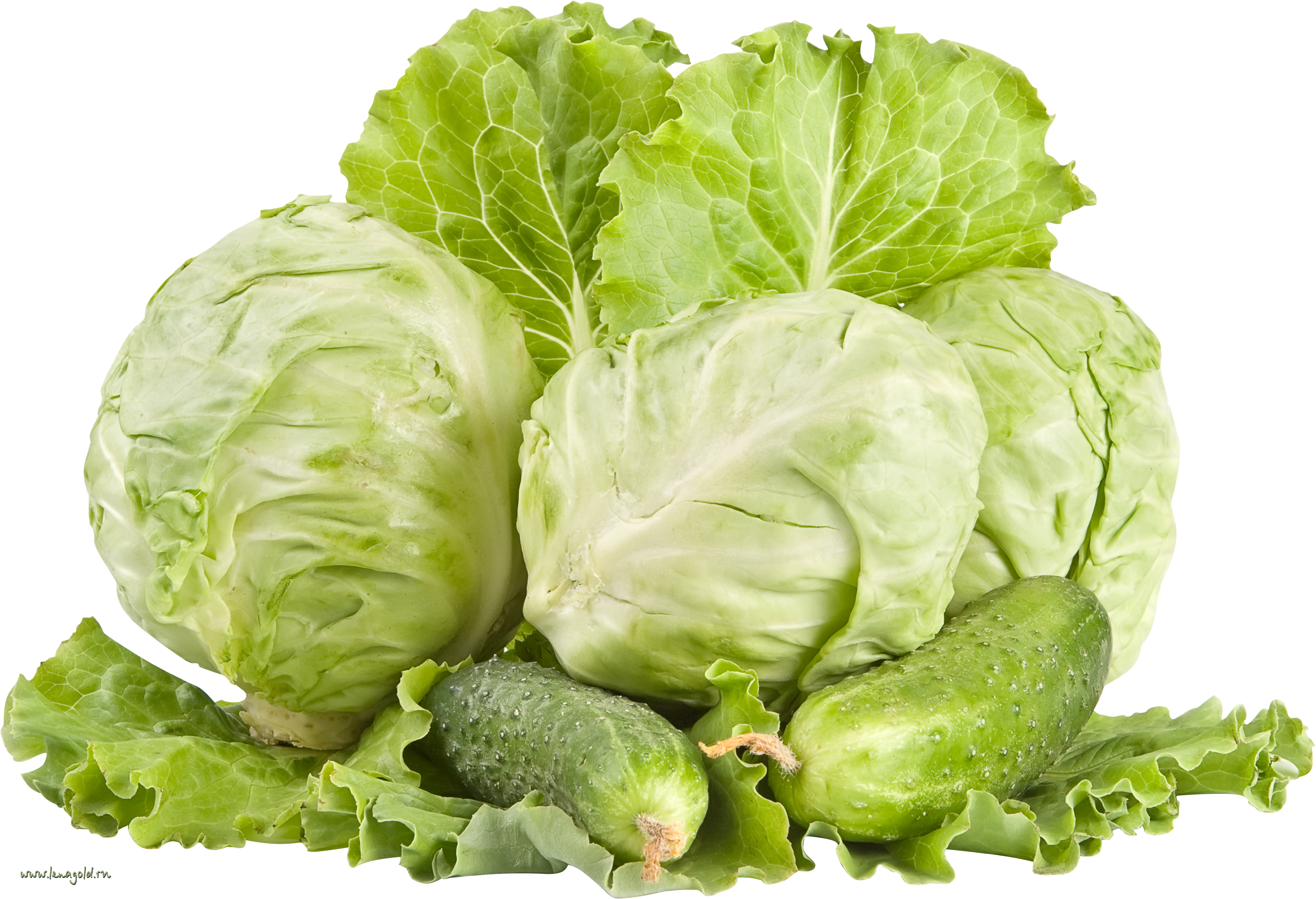 Transparency Cabbage