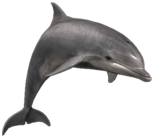 Dolphin Background