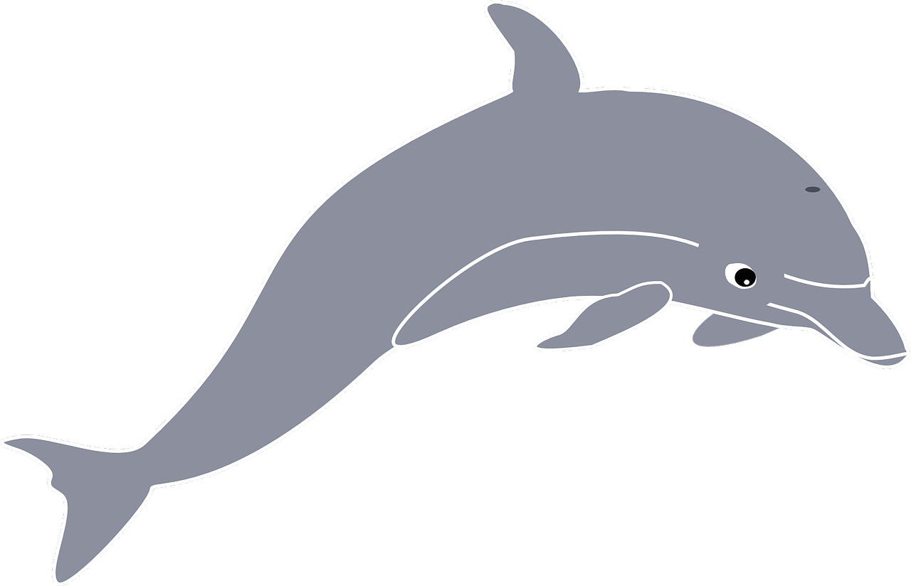 Dolphin Jumping Animal Cetacean