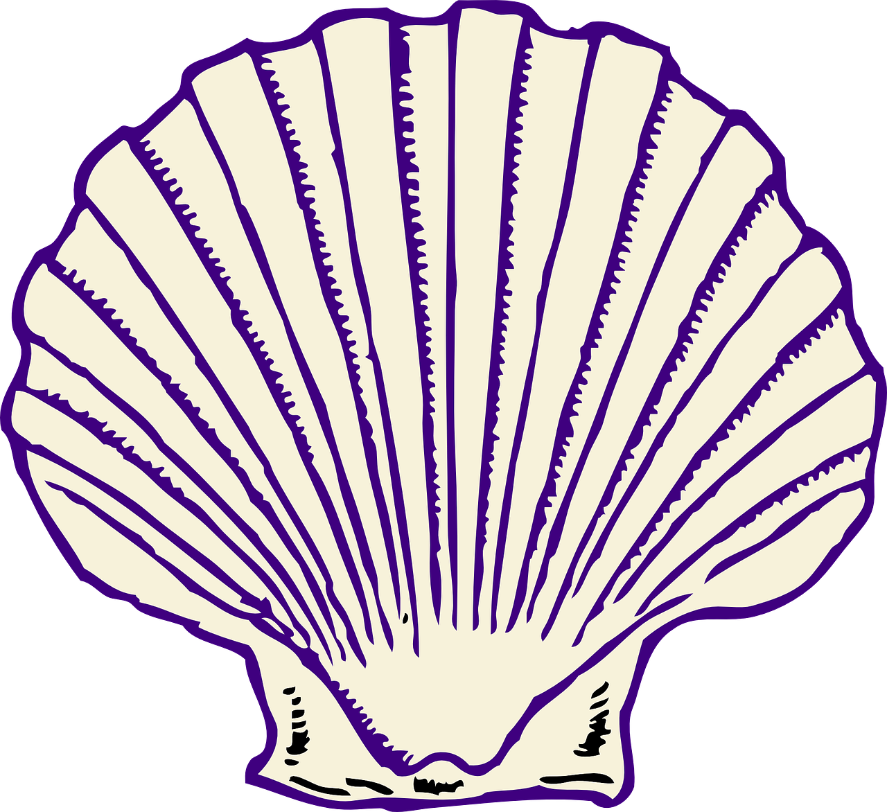 Seashell Clam Fan Purple