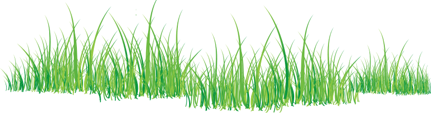 Transparency Grass