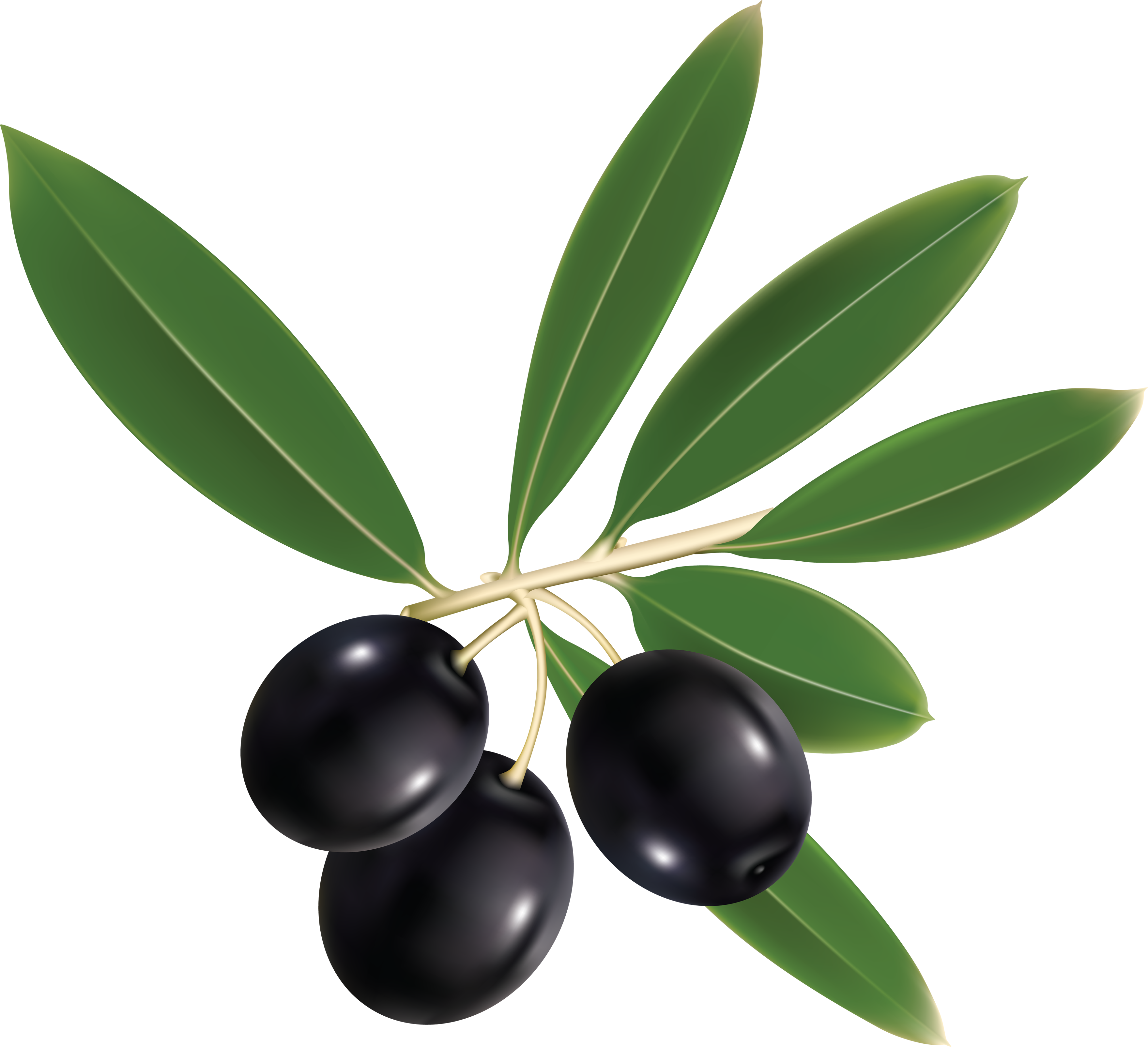 Olives Transparent