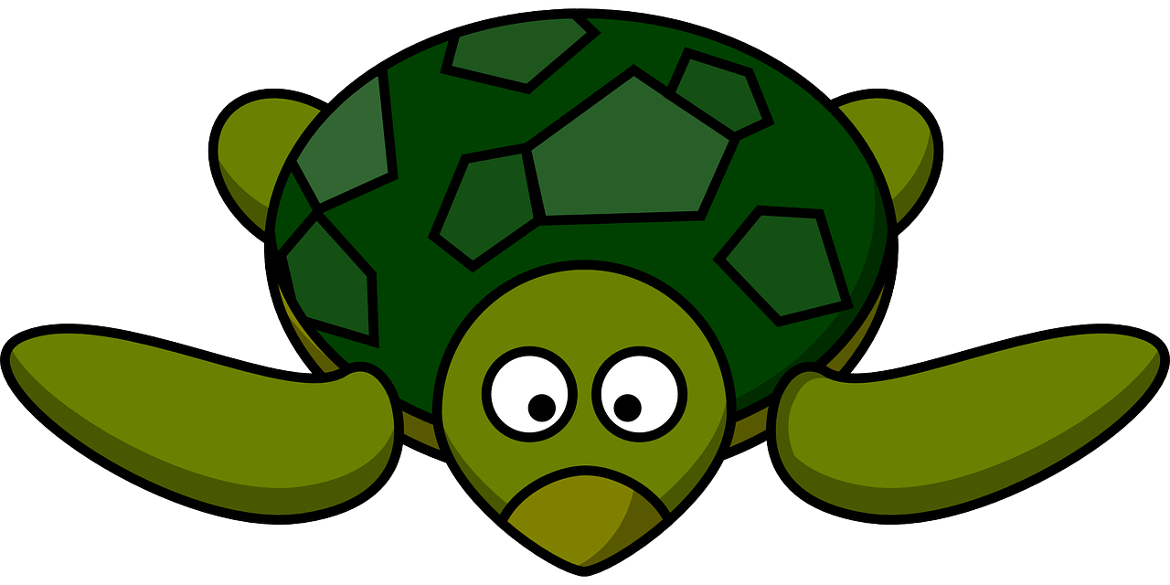 Turtle Green Tortoise Wildlife