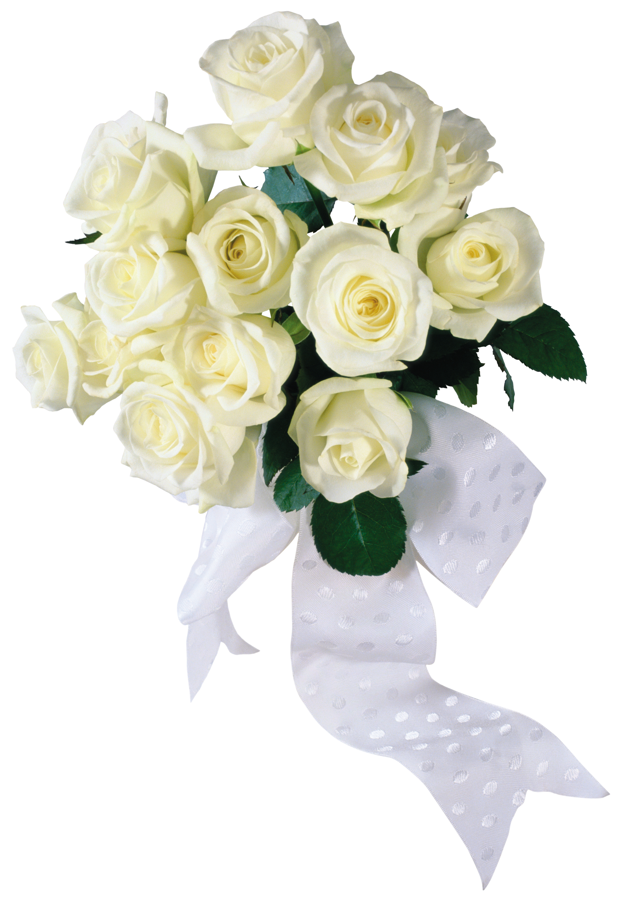 Transparency White roses